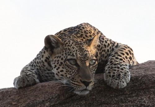 Leopard Beautiful Girl