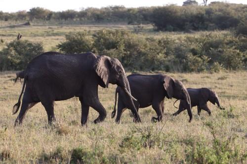 Three wise elephants