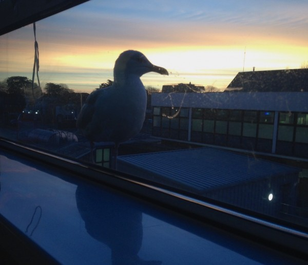 Bob at sunrise