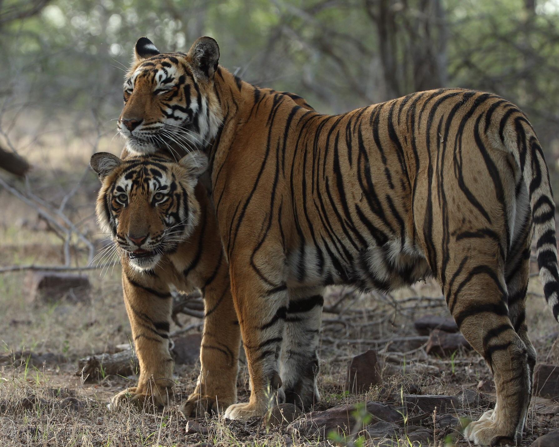 Mum and cub