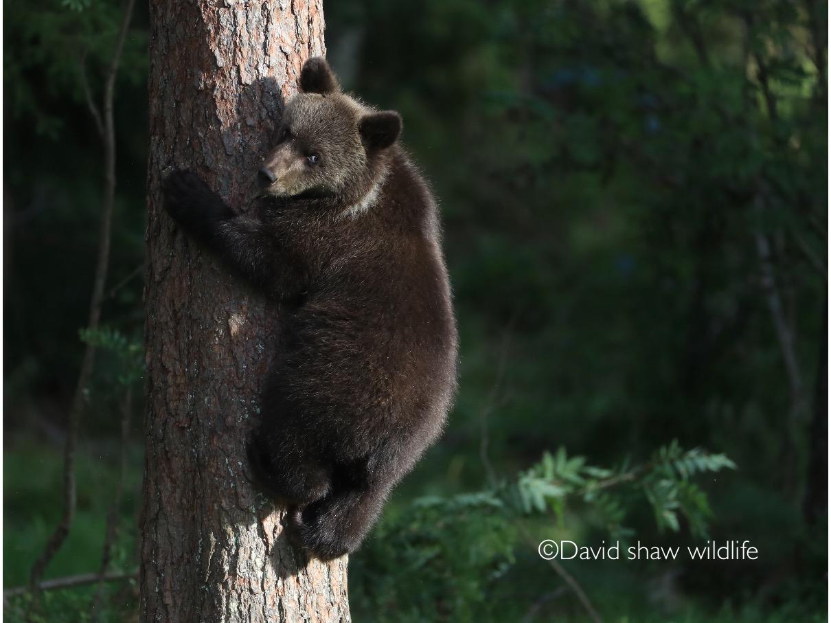 Cute bear !