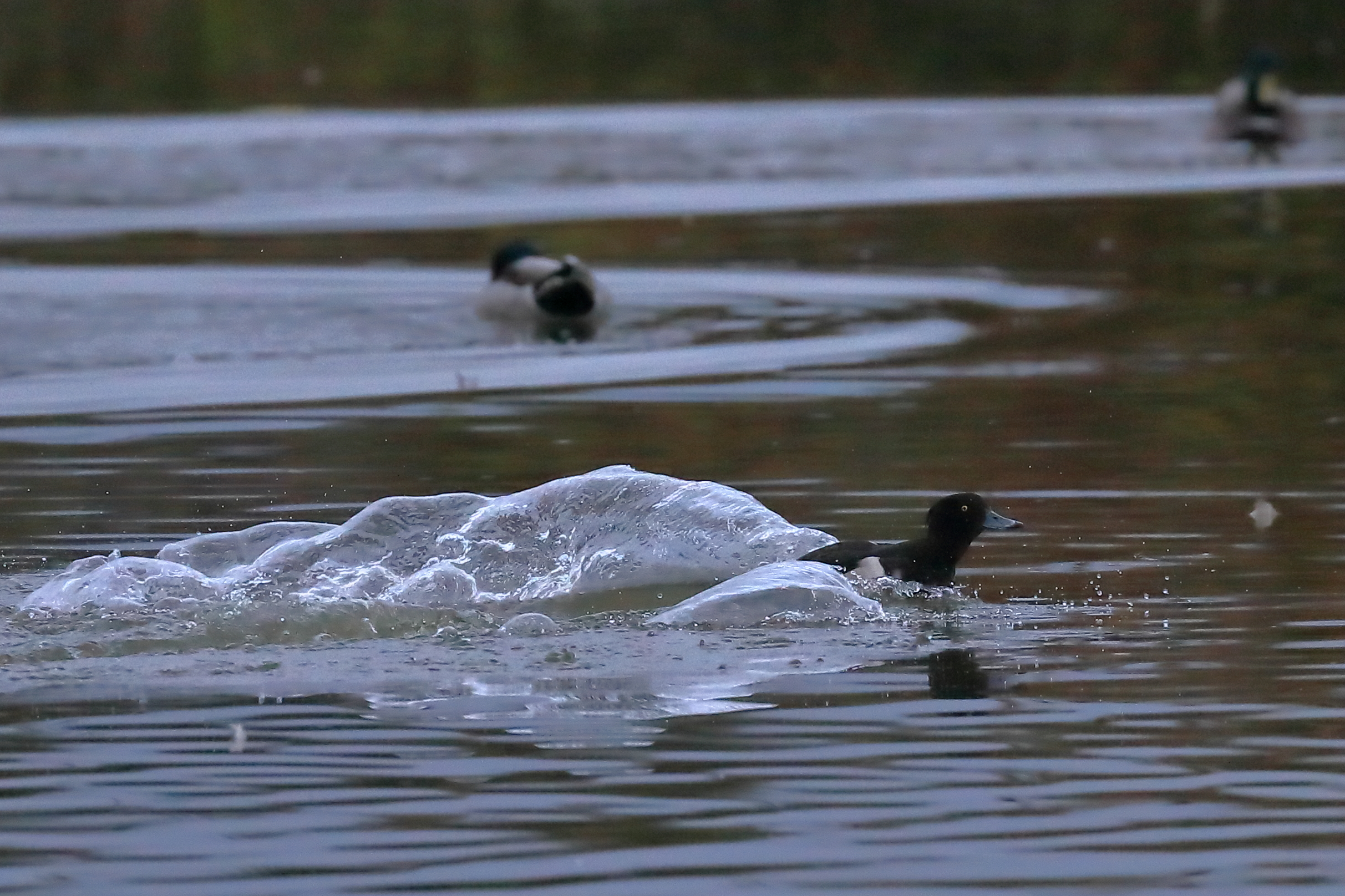 Splash....in I come.......